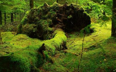 L'espace naturel forestier, espace d'intelligence